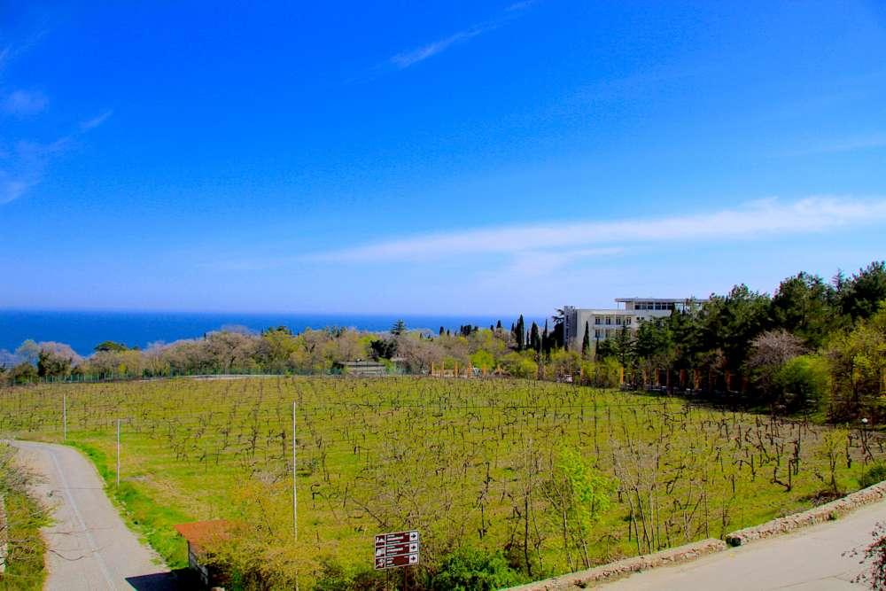 Квартира в Ливадии с видом на море 14