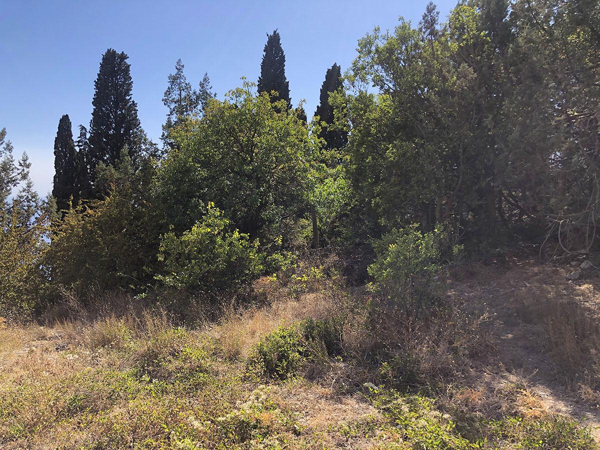 Продается земельный участок 5 соток в окружении кипарисов 1