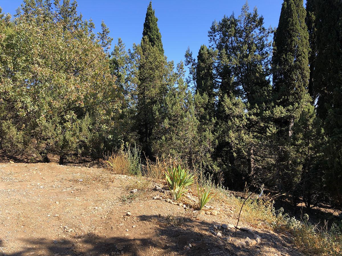 Продается земельный участок 5 соток в окружении кипарисов 2